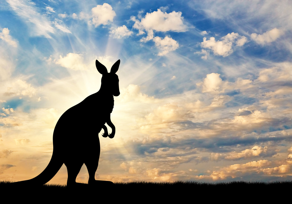 Kangaroo silhouette against a beautiful sky
